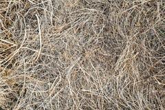 烘干,去年的草 老秸杆背景纹理 通过老腐烂的草打破年轻草 库存照片