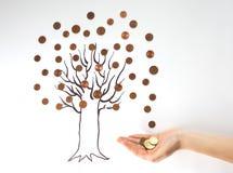 烘干贪污来的钱结构树 库存图片