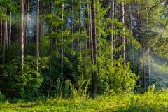 烟在森林夏天晚上 从火的烟水平地上面地面传播了 图库摄影