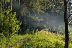 烟在森林夏天晚上 从火的烟水平地上面地面传播了 免版税库存图片