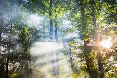 烟在森林里 库存图片