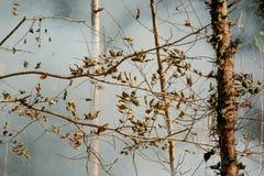 烟大草原火 在森林的灌木破坏的中干草火焰 免版税库存图片