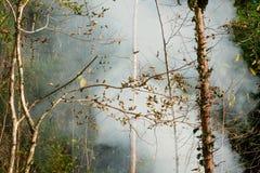 烟大草原火 在森林的灌木破坏的中干草火焰 图库摄影