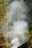 烟大草原火 在森林的灌木破坏的中干草火焰 库存照片