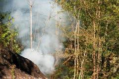 烟大草原火 在森林的灌木破坏的中干草火焰 库存图片