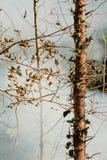 烟大草原火 在森林的灌木破坏的中干草火焰 免版税库存照片