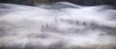 烟波浪在山森林有薄雾的早晨全景 免版税库存照片