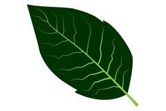 烟草叶子传染媒介 库存例证