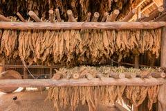 烟草在棚子把干燥留在 免版税库存照片