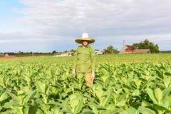 烟草田- Vinales谷,古巴 库存图片