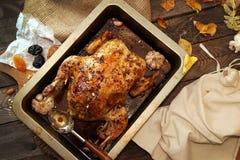 烤小火鸡为庆祝感恩天 库存图片