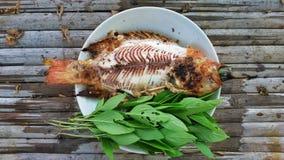 烤尼罗罗非鱼 库存图片