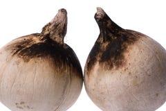 烤椰子 免版税库存照片