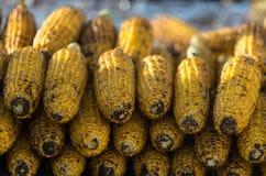 烤的玉米 库存照片