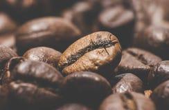 烤的豆咖啡 特写镜头 免版税库存图片