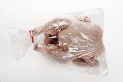 烤箱袋子 免版税库存图片