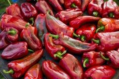 烤红辣椒为一顿鲜美膳食做准备 免版税库存照片
