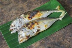 烤鲭鱼 库存图片