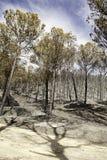 烧在与影子的林木 图库摄影