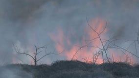 烧在大草原的灌丛火 股票视频