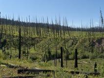烧在森林下 免版税库存照片