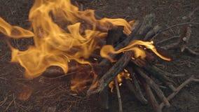 烧在森林关闭的晚上的慢动作营火看法 股票视频