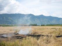 烧在稻农场的米秸杆开放领域影响了空气Pollut 库存图片