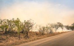 烧在自然公园的林区大火在南非-灾害在灌木森林里 免版税库存图片