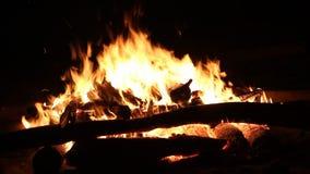 烧在黑暗的背景的篝火 股票视频