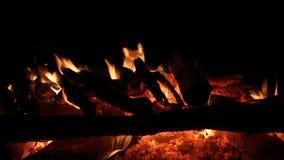 烧在黑暗的背景的篝火 影视素材