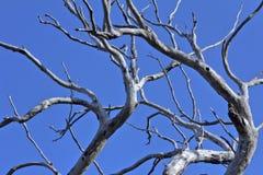 烧坏的死的树 图库摄影