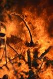 烧树的火火焰在森林里 免版税库存图片