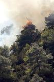 烧森林 免版税库存图片