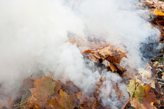 烧老叶子在公园 免版税图库摄影