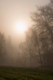 烧通过雾的太阳 图库摄影