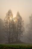 烧通过雾的太阳 免版税库存图片