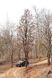 热切地等待老虎瞄准的摄影师在Pench国家公园 库存图片