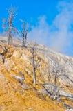 热声势浩大的国家公园反弹黄石 美国 免版税库存照片