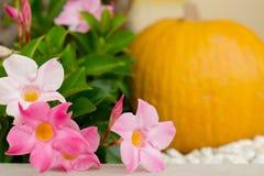 热带万圣夜装饰用南瓜和花 免版税库存照片