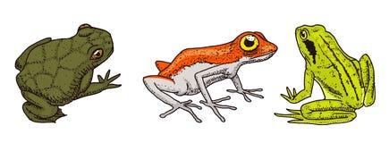 热带两栖动物 通配的动物 青蛙和无尾类, hoptoad或蟾蜍 刻记手拉在老葡萄酒剪影 向量 库存例证