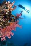 热带五颜六色的潜水员礁石水肺的sihouette 免版税库存照片