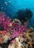 热带五颜六色的礁石的场面 免版税库存照片