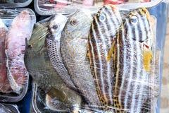 热带五颜六色的鱼待售在市场上 库存图片