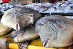 热带五颜六色的鱼待售在市场上 库存照片