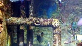 热带五颜六色的鱼 影视素材