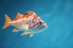 热带五颜六色的鱼 图库摄影