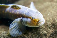 热带五颜六色的鱼 免版税库存照片
