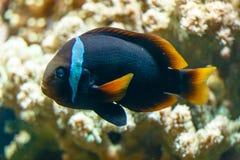 热带五颜六色的鱼 免版税图库摄影