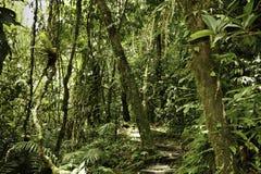 热带亚马逊深绿色密林主要的雨 免版税库存图片