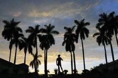 热带佛罗里达的日落 免版税库存图片